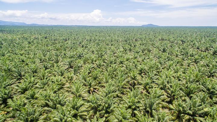 Mondelēz International mantiene su compromiso total para impulsar el cambio en el sector del aceite de palma.