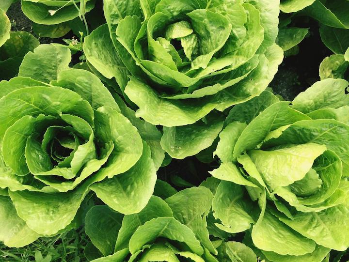 De acuerdo con la firma británica de investigación de mercados, Ecovia Intelligence, el mercado mundial de comida orgánica sigue creciendo en 2018.
