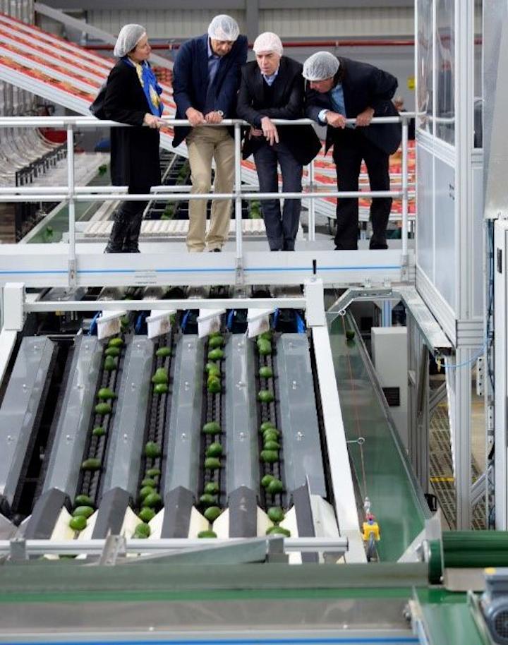 Como parte de su equipamiento tecnológico, las instalaciones en Sonsón cuentan con un seleccionador multilínea desarrollado por el fabricante neozelandés Compac. Foto cortesía Westfalia Fruit.
