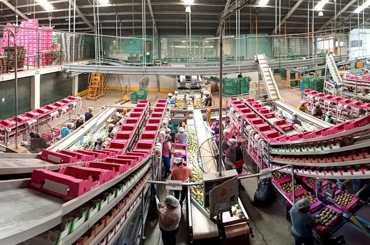 Fruta-Exporta es una empresa familiar de segunda generación que cuenta hoy con una participación del 15% del total de las exportaciones de mangos frescos mexicanos a los Estados Unidos, y con ventas anuales superiores a 6,5 millones de cajas.